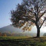 PHOTOGRAPHIES dans photographies arbre_automne_coucher_soleil_fouchy_france-150x150