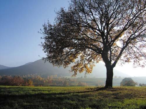 Arbre en automne en contre-jour près de Fouchy