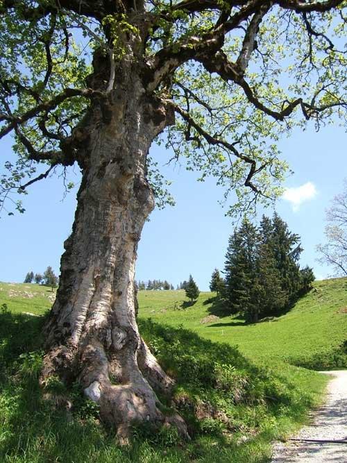 Près de Mellau en Autriche