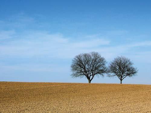 paysage_arbre_minimaliste_printemps_france ailes