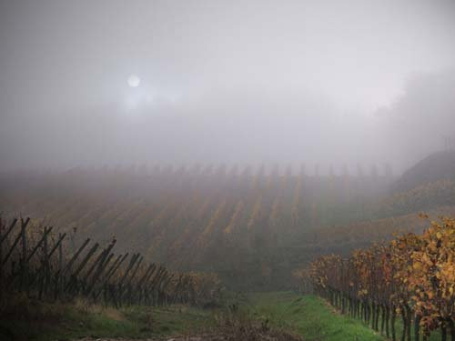 vignes_brume_nothalten_alsace_france airplane